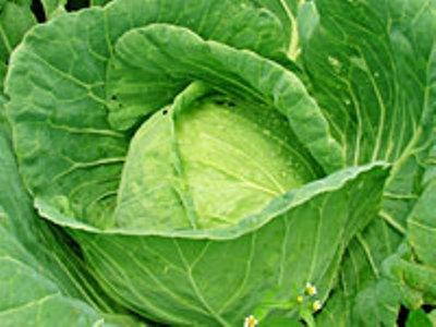 424754 repolho Legumes que ajudam a emagrecer
