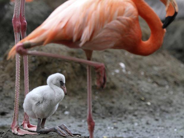 425876 M%C3%A3es e filhotes na natureza fotos 16 Mães e filhotes na natureza: fotos