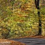 425990 floresta no outono 150x150 Paisagens do outono: fotos