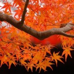 425990 foto outono tofukuji in kyoto japan 150x150 Paisagens do outono: fotos