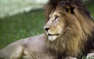 Animais definham em zoológico no interior de SC