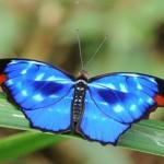 426588 As borboletas mais bonitas da natureza fotos 1 150x150 As borboletas mais bonitas da natureza: fotos