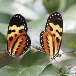 426588 As borboletas mais bonitas da natureza fotos 10 150x150 As borboletas mais bonitas da natureza: fotos