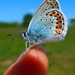 426588 As borboletas mais bonitas da natureza fotos 12 150x150 As borboletas mais bonitas da natureza: fotos