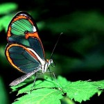 426588 As borboletas mais bonitas da natureza fotos 18 150x150 As borboletas mais bonitas da natureza: fotos