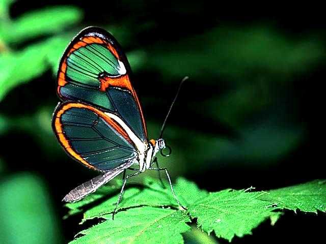 426588 As borboletas mais bonitas da natureza fotos 18 As borboletas mais bonitas da natureza: fotos