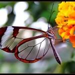 426588 As borboletas mais bonitas da natureza fotos 21 150x150 As borboletas mais bonitas da natureza: fotos