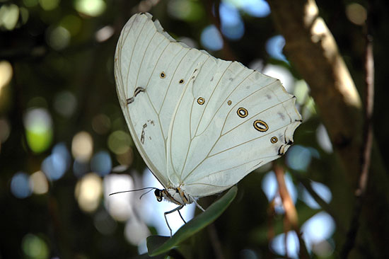 426588 As borboletas mais bonitas da natureza fotos 22 As borboletas mais bonitas da natureza: fotos