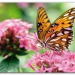 426588 As borboletas mais bonitas da natureza fotos 3 150x150 As borboletas mais bonitas da natureza: fotos
