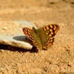 426588 As borboletas mais bonitas da natureza fotos 5 150x150 As borboletas mais bonitas da natureza: fotos