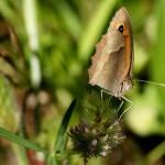 426588 As borboletas mais bonitas da natureza fotos 9 150x150 As borboletas mais bonitas da natureza: fotos