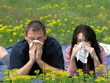 426864 A febre de feno pode se causa pelo pólen de algumas plantas. Remédio natural para rinite alérgica