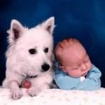 427493 Crianças e animais fotos 1 150x150 Crianças e animais: fotos