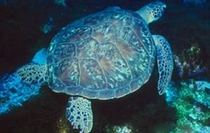 Atlantis Divers: mergulho em Fernando de Noronha