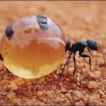 430396 Os insetos mais estranhos do mundo 03 150x150 Os insetos mais estranhos do mundo