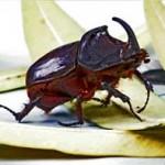 430396 Os insetos mais estranhos do mundo 15 150x150 Os insetos mais estranhos do mundo