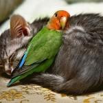 431770 Amizade entre os animais fotos 01 150x150 Amizade entre os animais: fotos