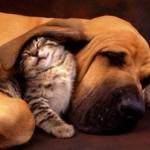 431770 Amizade entre os animais fotos 02 150x150 Amizade entre os animais: fotos