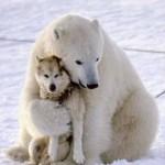 431770 Amizade entre os animais fotos 05 150x150 Amizade entre os animais: fotos