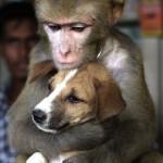 431770 Amizade entre os animais fotos 06 150x150 Amizade entre os animais: fotos
