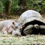 431770 Amizade entre os animais fotos 12 150x150 Amizade entre os animais: fotos