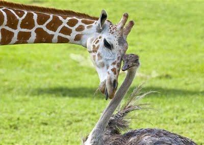 431770 Amizade entre os animais fotos 15 Amizade entre os animais: fotos