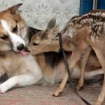 431770 Amizade entre os animais fotos 18 150x150 Amizade entre os animais: fotos