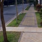 431805 Calçadas verdes como montar fotos 5 150x150 Calçadas verdes: como montar, fotos
