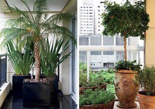 432146 O Vaso Ideal Para Cada Planta 1 O Vaso Ideal Para Cada Planta
