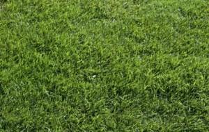 Como evitar doenças no gramado