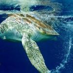 436410 animais marinhos fotos 001 150x150 Imagens de animais marinhos