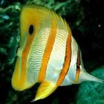 436410 animais marinhos fotos 003 150x150 Imagens de animais marinhos