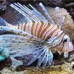 436410 animais marinhos fotos 006 150x150 Imagens de animais marinhos