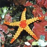 436410 animais marinhos fotos 021 150x150 Imagens de animais marinhos