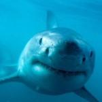 436410 animais marinhos fotos 05 150x150 Imagens de animais marinhos