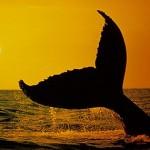 436410 animais marinhos fotos 09 150x150 Imagens de animais marinhos