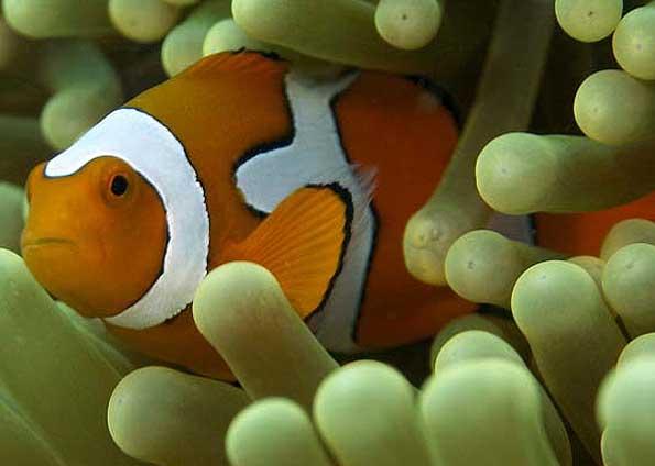 436410 animais marinhos fotos 12 Imagens de animais marinhos