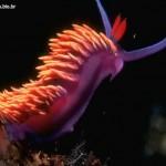 436410 animais marinhos fotos 14 150x150 Imagens de animais marinhos