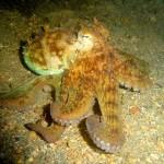 436410 animais marinhos fotos 15 150x150 Imagens de animais marinhos