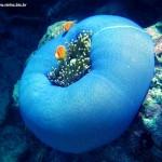 436410 animais marinhos fotos 18 150x150 Imagens de animais marinhos