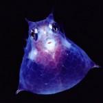 436410 animais marinhos fotos 20 150x150 Imagens de animais marinhos