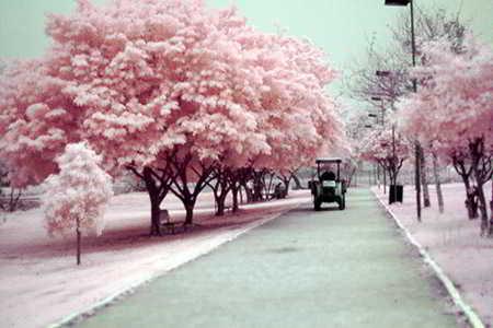 439573 O inverno pelo mundo fotos 15 O Inverno pelo mundo: fotos
