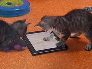 440488 Affection Collection 1 Affection Collection: jogos em tablet para gatos