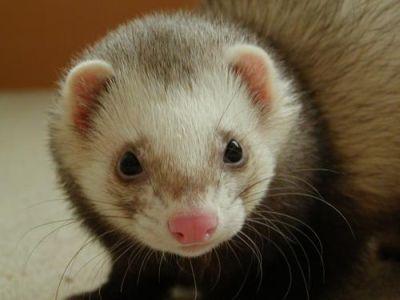 440823 animais de estimacao exoticos 6 Animais de estimação exóticos