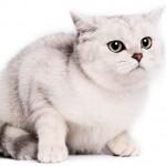 445021 Raças diferentes de cães e gatos fotos 10 150x150 Raças diferentes de cães e gatos: fotos