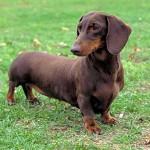 445021 Raças diferentes de cães e gatos fotos 19 150x150 Raças diferentes de cães e gatos: fotos