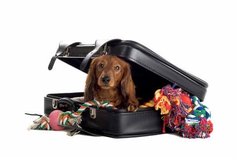 446232 Hot%C3%A9is que aceitam cachorros 2 Hotéis que aceitam cachorros