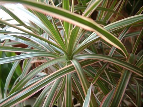 455638 Plantas fáceis de cultivar sugestões dicas 2 Plantas fáceis de cultivar: sugestões, dicas