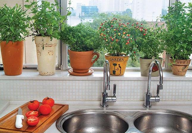 456529 Horta de ervas arom%C3%A1ticas como fazer 4 Horta de ervas aromáticas: como fazer