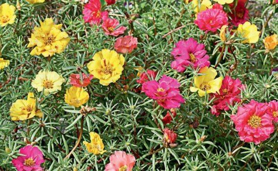 plantas jardim de sol:458008 Plantas que gostam de sol 1 Plantas que gostam de sol